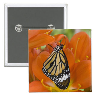Sammamish, Washington. Tropical Butterflies 69 15 Cm Square Badge