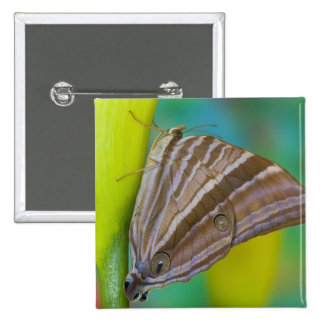 Sammamish, Washington. Tropical Butterflies 8 15 Cm Square Badge