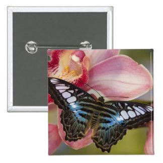Sammamish, Washington Tropical Butterfly 2 15 Cm Square Badge