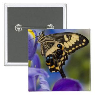 Sammamish, Washington Tropical Butterfly 6 15 Cm Square Badge