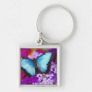 Sammamish Washington Tropical Butterfly 7 Silver-Colored Square Key Ring