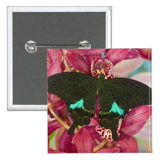 Sammamish, Washington Tropical Butterfly 9 15 Cm Square Badge