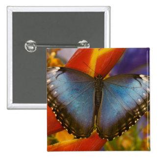 Sammamish Washington Tropical Butterfly 9 15 Cm Square Badge
