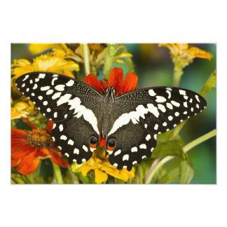 Sammamish, Washington Tropical Butterfly Photo