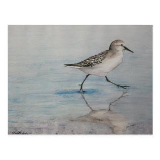 Sand Piper Bird Art Postcard