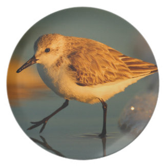 sand piper party plate