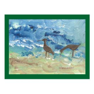 Sand piper postcard