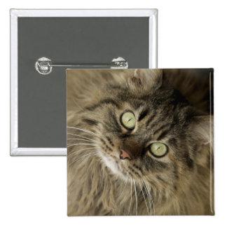Santa Fe, New Mexico, USA. Maine coon cat. (PR) 15 Cm Square Badge