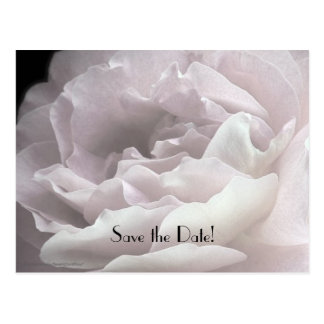 Save the Date 100th Birthday Rose Petals Postcard
