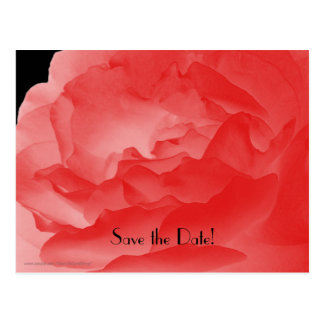 Save the Date 50th Birthday Celebration Postcard