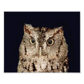 Screech Owl Photo Print