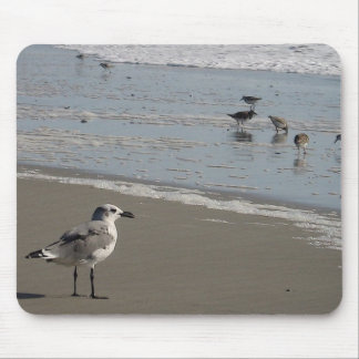 sea gull by the shore mouse pad