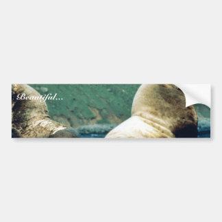 Sea Lion Bull Bumper Sticker