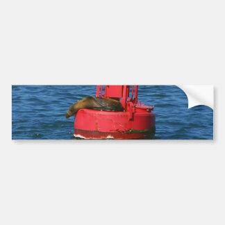 Sea Lion On Buoy Bumper Sticker