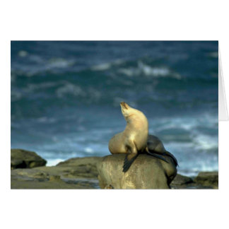 Sea Lion On Rock Greeting Card
