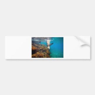 Sea lion upside down underwater paradise lagoon bumper sticker