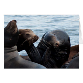 Sea Lions at West Port, WA Greeting Card