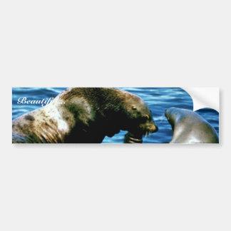 Sea Lions Bumper Sticker