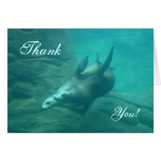 Sea Lions Thank You Card