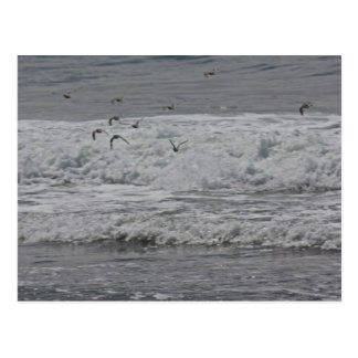 Sea & Sand Pipers! Postcard