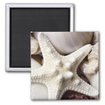 Sea Shell Starfish Background - Beach Shells Square Magnet