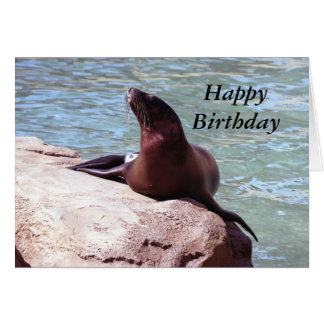 Seal Birthday Card