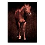 Secretrock the horse postcard