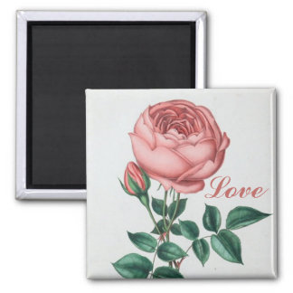 Shabby Chic Love Vintage Pink Rose Magnet