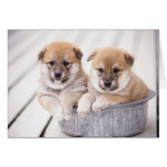 Shiba Inu puppies in aluminium tub Greeting Card