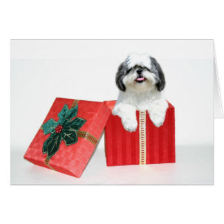 Shih Tzu Christmas gift Greeting Card