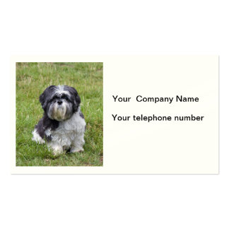 Shih Tzu dog beautiful cute photo business card