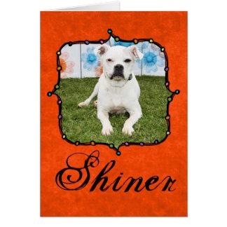 Shiner - Boxer Greeting Card