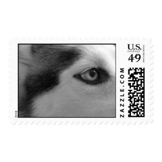 Shiner Postage Stamps