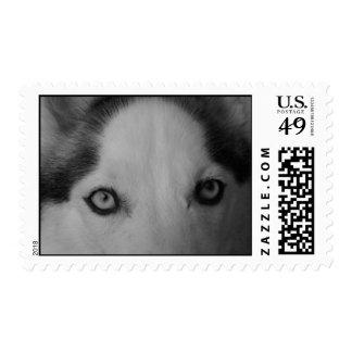 Shiner's eyes postage stamp