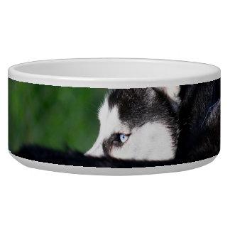 Siberian Husky Pet Water Bowl