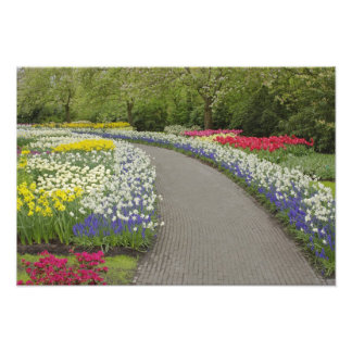 Sidewalk pathway through tulips and daffodils, 2 photo print