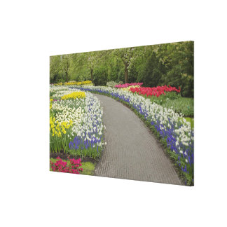 Sidewalk pathway through tulips and daffodils, 2 stretched canvas print