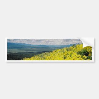 Signal Mountain Wildflowers Bumper Sticker