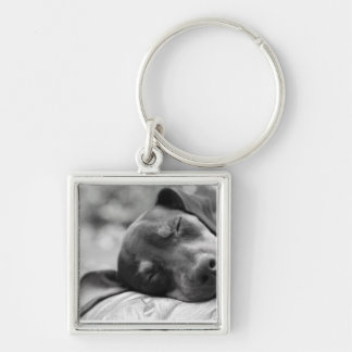 Sleeping Miniature Pinscher dog Silver-Colored Square Key Ring