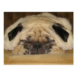 Sleeping Pug Postcard