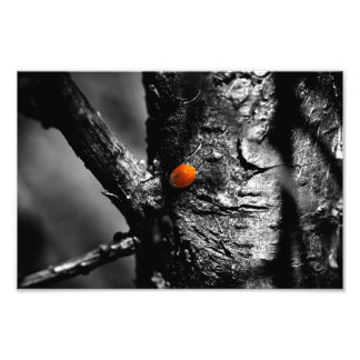 smile for a ladybug art photo