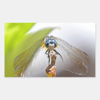 Smiling Dragonfly Macro Photo Rectangular Sticker