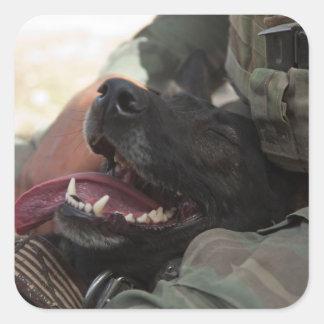 Smiling German Shepherd Military Dog Square Sticker