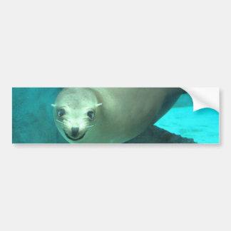 Smiling Sea Lion - Saint Louis Zoo Bumper Sticker