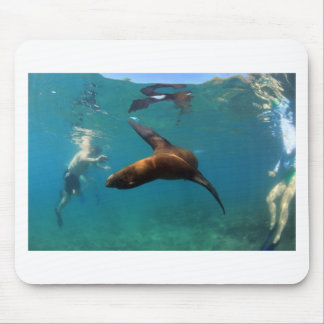 Snorkeling with playful sea lion Galapagos Islands Mouse Pad