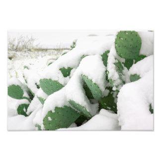 Snow in the Desert Photo Print