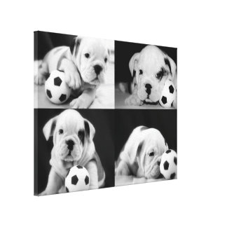 """""""Soccer Puppies"""" English Bulldog Collage Stretched Canvas Print"""