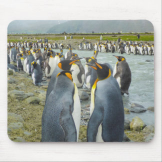 South Georgia. Saint Andrews. King penguin 6 Mouse Pad