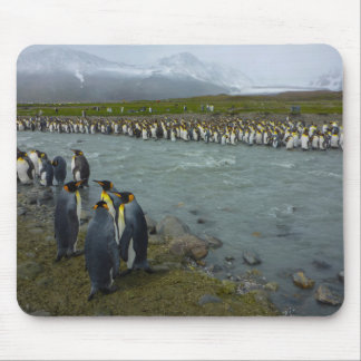South Georgia. Saint Andrews. King penguin 7 Mouse Pad