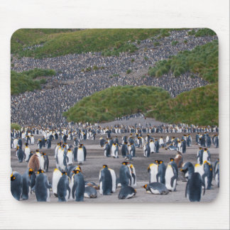 South Georgia. Salisbury Plain. King penguins 4 Mouse Pad
